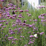 Trädgårdsmässa 27-28 april i Valhall Park