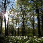 Möt våren i Skåne